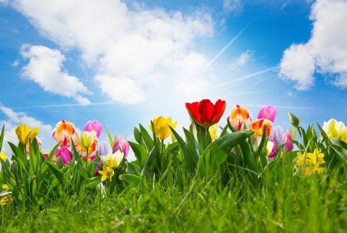 Vrije dagen voorjaar
